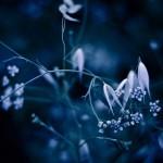night_blade_bush_55487_1920x1080