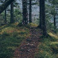 Forest_Path-412e05c7-656a-38d7-9f0b-8558b33830d7.jpg