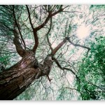 one_big_tree-t2.jpg